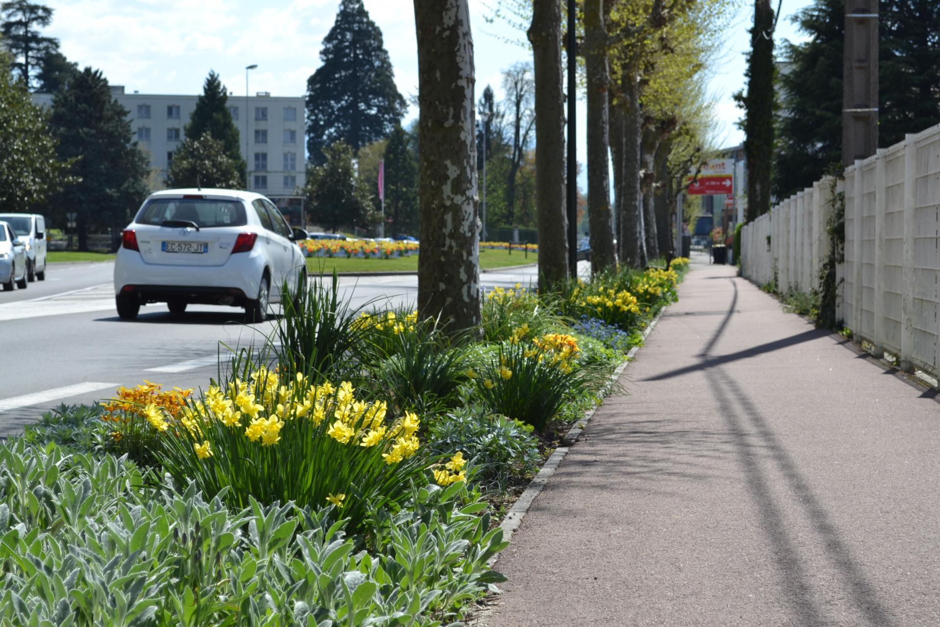 Aménagement paysager au printemps : bulbes et vivaces
