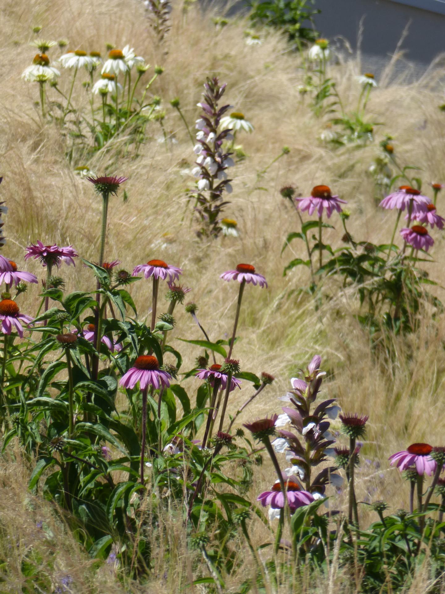 Aménagement paysager : une inspiration nature