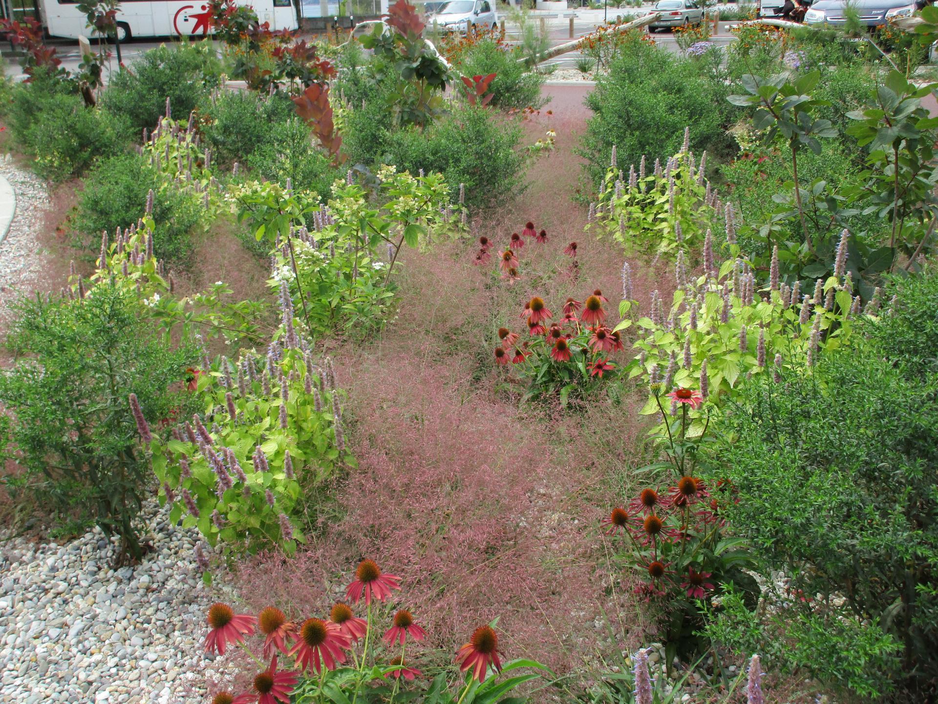 Aménagement paysager : un jardin de graviers