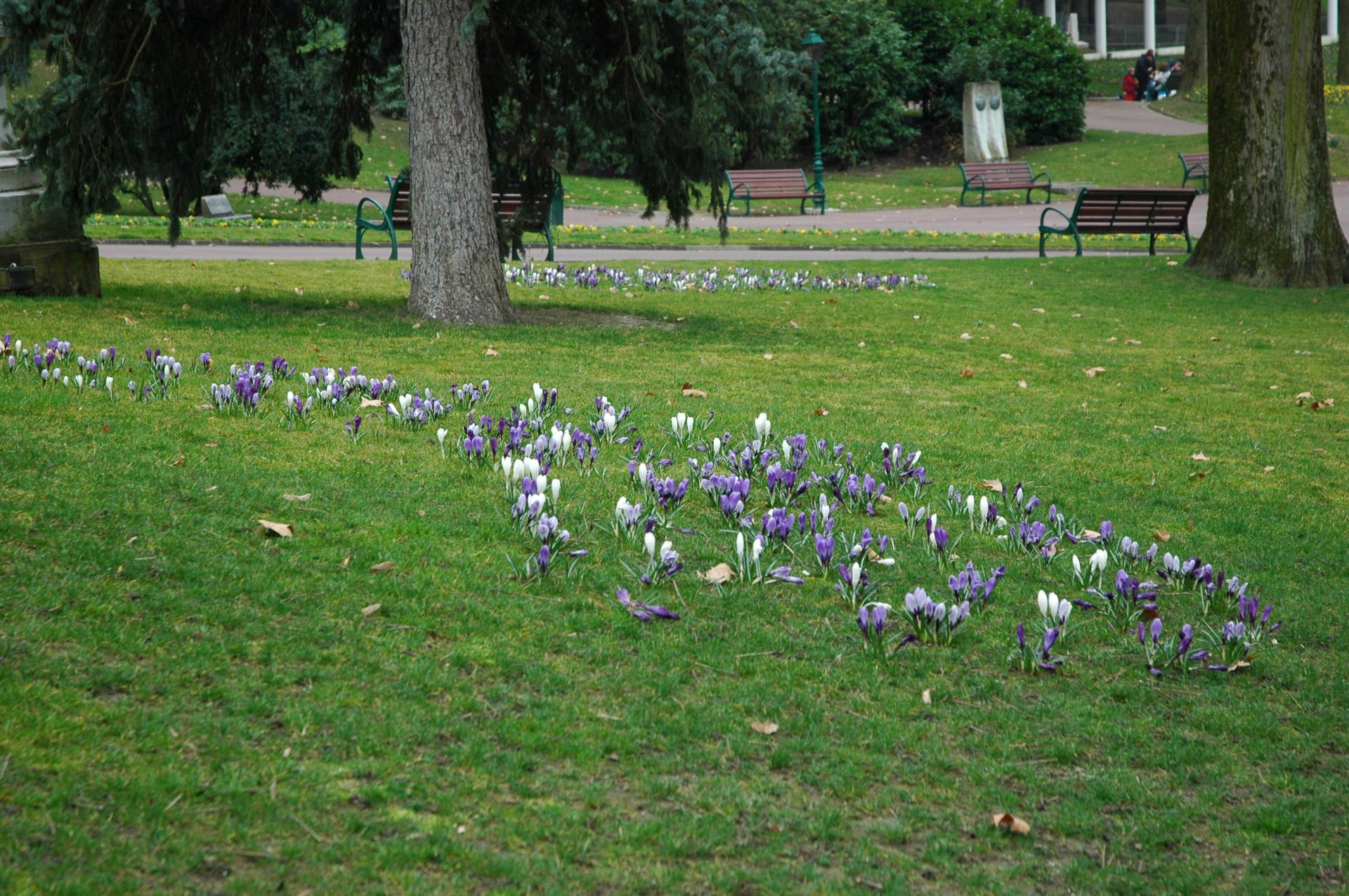 Dans le parc, bulbes naturalisés